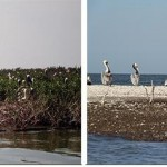 L'île-aux-chats affectée par le déversement de pétrole de BP. (Photo: CC)